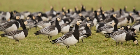 Goose Shooting Trial | Wader Habitat Destruction